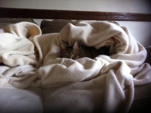 Flo, keeping cozy.
